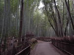 14_bamboo