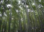 15_bamboo