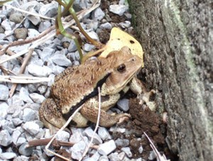 0090620_frog